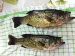 bass-cuisine.jpg