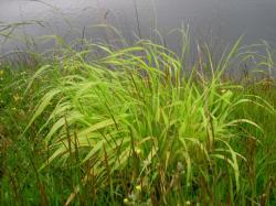 planteb1.jpg