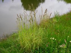plantec1.jpg