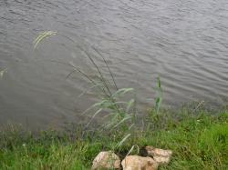 plantef1.jpg
